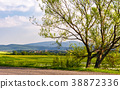 tree along the road in mountainous countryside 38872336