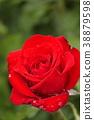 장미, 장미꽃, 로즈 38879598