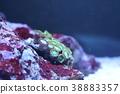 珊瑚 海洋 海 38883357