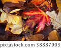 Autumn Leaves 38887903