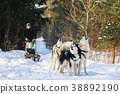 The man with dog sled in forest 38892190