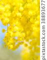 【도쿄】 아카시아 꽃 38893677