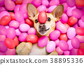 happy easter dog with eggs 38895336