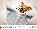 dog reading newspaper 38895340