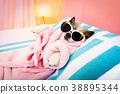 dog, salon, spa 38895344