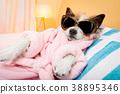 dog, salon, spa 38895346
