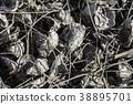 採蚵 養殖 芳苑濕地 38895701