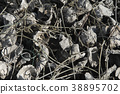 採蚵 養殖 芳苑濕地 38895702