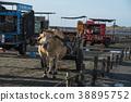 濕地 牛車 牛 38895752