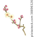 White plum and buds 38896326