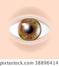 Human Eye Vector. Visual Examination. Body Check 38896414