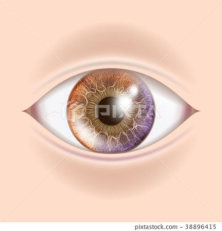 Human Eye Vector. Optometrist Check. Organ Test 38896415