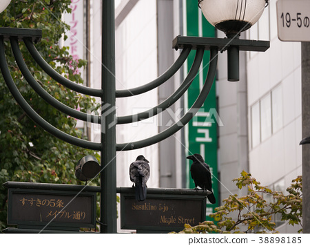 Crows Perched on Street Sign 38898185