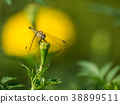 The Dragonfly Perched on The Bud 38899511