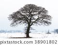 Big old tree silhouette 38901802