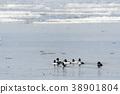 Flock with cute Goldeneye ducks 38901804