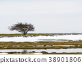Lone tree in a landscape with melting snow 38901806