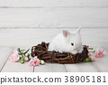Easter bunny with flowers on white planks 38905181