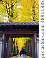 가을, 은행나무, 은행나무 가로수 38911885