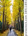 가을, 은행나무, 은행나무 가로수 38911891
