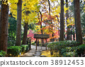 가을, 은행나무, 은행나무 가로수 38912453