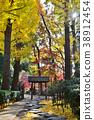 가을, 은행나무, 은행나무 가로수 38912454