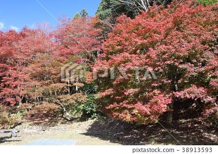 The famous spot of autumnal leaves of Kitoshiji Temple / Keiso-ji (Former Iifuku-jia / Kyu Hanpukuji) / the autumn leaves of North Omi 38913593
