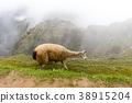 Machu Picchu , Peru, 38915204