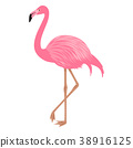 Flamingo isolated on the white background. 38916125