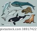 Sea mammals animal collection icons set 38917422