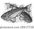 日本叉牙鱼 鱼 新鲜的鱼 38917738