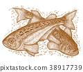 日本叉牙鱼 鱼 新鲜的鱼 38917739
