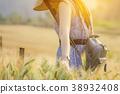 Woman walking through yellow barley wheat field 38932408