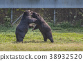 animal, animals, bear 38932520