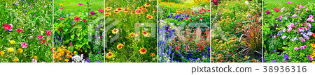 Set panoramic flowering flowers. 38936316