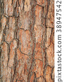 Bark of Pine Tree 38947542