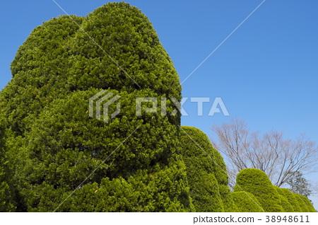 花园树 38948611