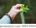 man hand holding an exotic green clover leave 38953004