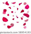 rose pink petal 38954193