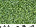 nori seaweed, dried laver, seaweed 38957400