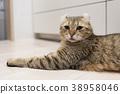 แมว 38958046