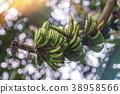 wild banana bunch unripe on green bokeh background 38958566