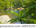飞蜘蛛 猴子 树蕨 38959145