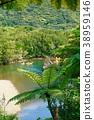 飞蜘蛛 猴子 树蕨 38959146