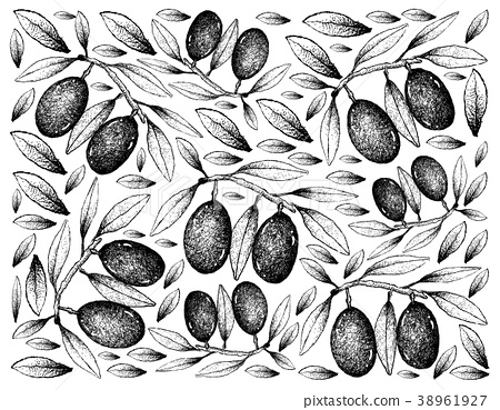 Hand Drawn Background of Fresh Olive Fruits 38961927