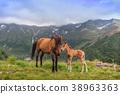 horses grazing 38963363