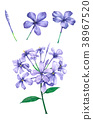 Watercolor Violet Flower , on white background 38967520