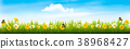 Spring nature landscape banner with flowers  38968427
