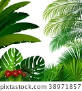 plant tropical exotic 38971857