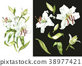 Watercolor set of white lilies, hand drawn 38977421